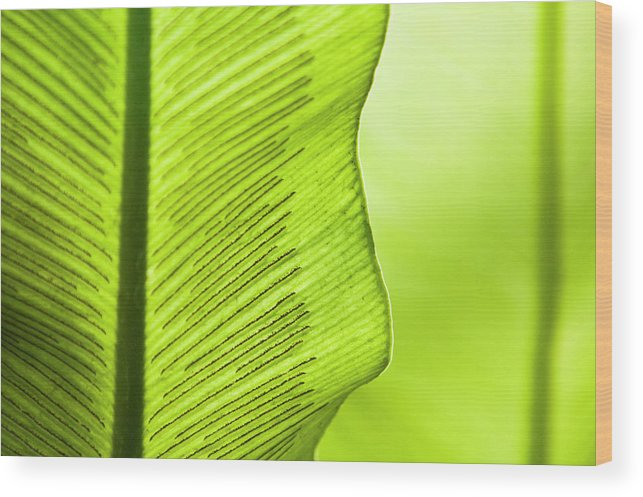 Outdoors Wood Print featuring the photograph Spores Of A Fern by By Ken Ilio
