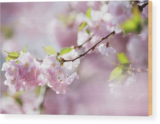 People Wood Print featuring the photograph Spring by Goldhafen