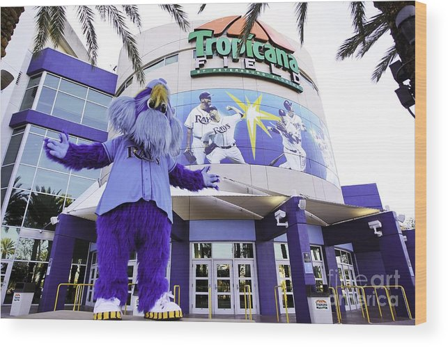 American League Baseball Wood Print featuring the photograph Tampa Bay Rays Mascot by Mlb Photos