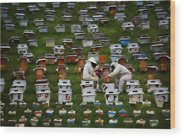 Beekeeper Wood Print featuring the photograph The Beekeepers by Niyazi Gürgen