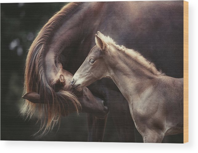 Horses Wood Print featuring the photograph The Bond by Heike Willers