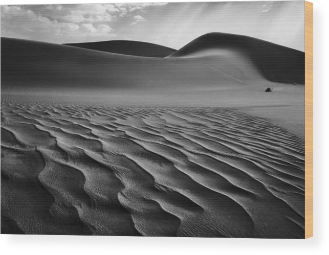 Namibia Wood Print featuring the photograph The Living Dunes, Namibia I by Neville Jones