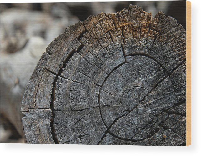 Tree Rings Wood Print featuring the photograph Tree Rings by Fred DeSousa