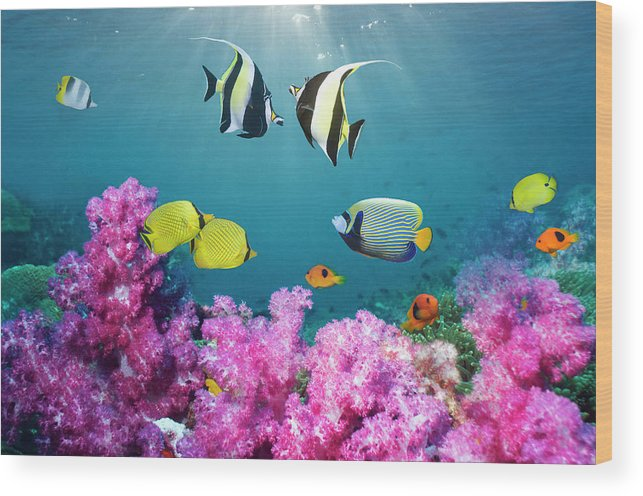 Tranquility Wood Print featuring the photograph Tropical Reef Fish Over Soft Corals by Georgette Douwma