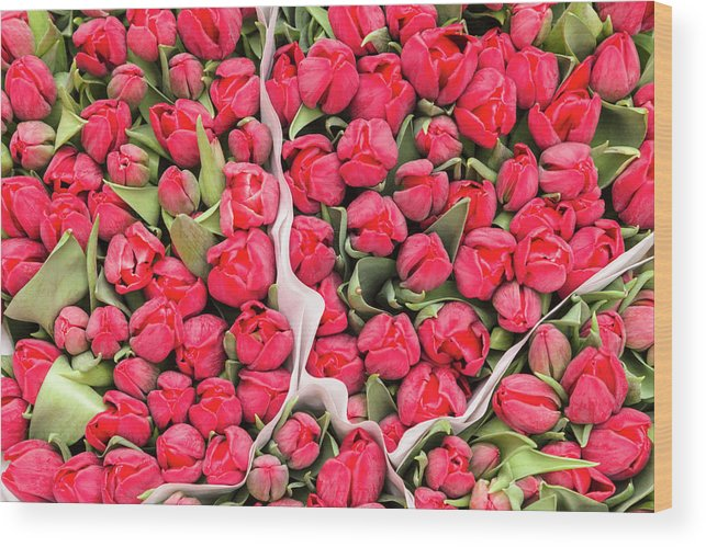 North Holland Wood Print featuring the photograph Tulips For Sale At A Flower Market by P A Thompson