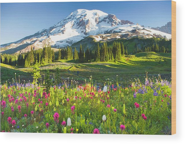 Scenics Wood Print featuring the photograph Usa, Washington, Mt. Rainier National by Rene Frederick