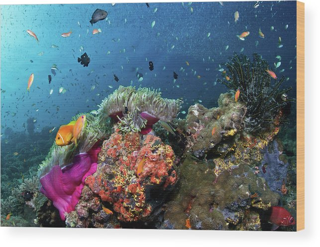 Underwater Wood Print featuring the photograph Vibrant Lives by Lea Lee