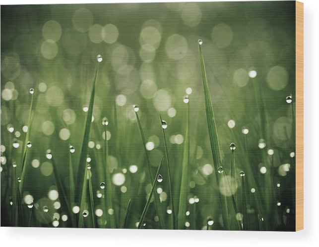 Grass Wood Print featuring the photograph Water Drops On Grass by Florence Barreau