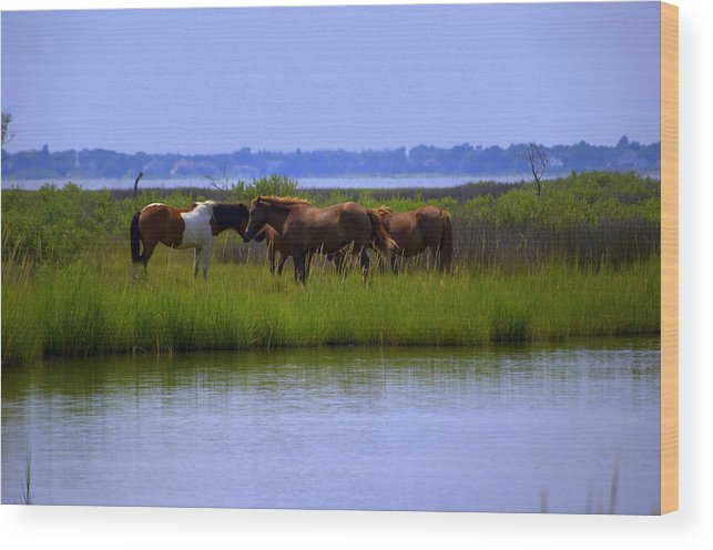 Horse Wood Print featuring the photograph Wild Horses Of Assateague Island by Robin Houde Photography
