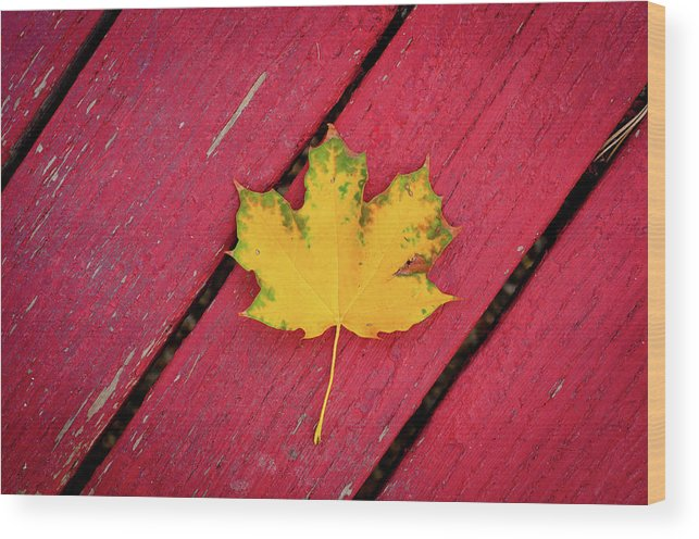 Outdoors Wood Print featuring the photograph Yellow Maple Leaf Against A Red Deck by Photo By Sam Scholes