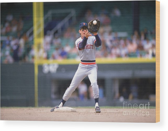 American League Baseball Wood Print featuring the photograph Alan Trammell by Ron Vesely