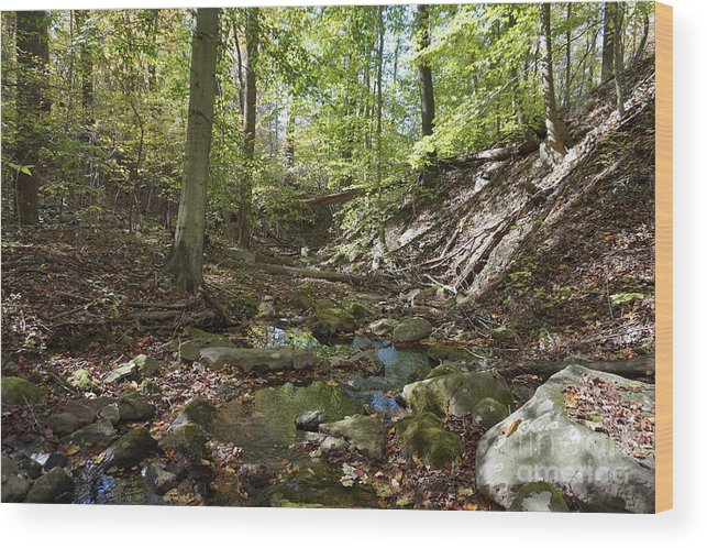 Landscape Wood Print featuring the photograph Bark Rocks 2 by Chris Naggy