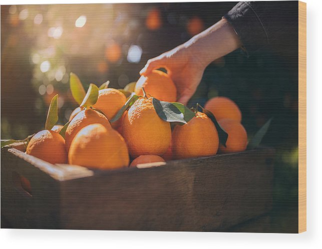 Vitamin C Wood Print featuring the photograph Farmer taking fresh orange from wooden box in orange orchard by Wundervisuals
