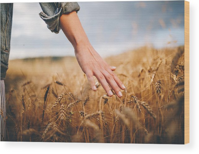 Child Wood Print featuring the photograph Golden wheat fields by FluxFactory