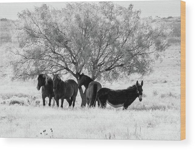 Smoke Wood Print featuring the photograph Horses Ass by Peyton Vaughn