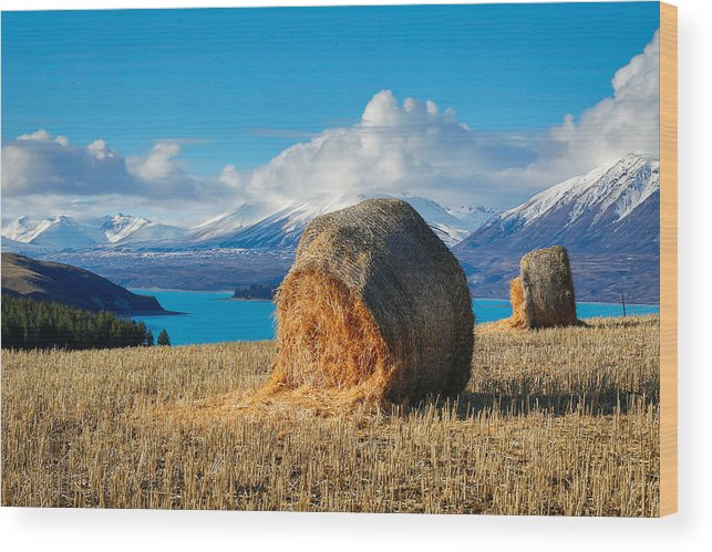 Tekapo Wood Print featuring the photograph Lake Tekapo with hay bales and mountain background by Lingxiao Xie