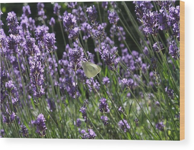 Lavender Wood Print featuring the photograph Lavender by Vicki Cridland