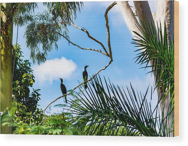 Cormorant Wood Print featuring the photograph Neotropic cormorant by CRMacedonio