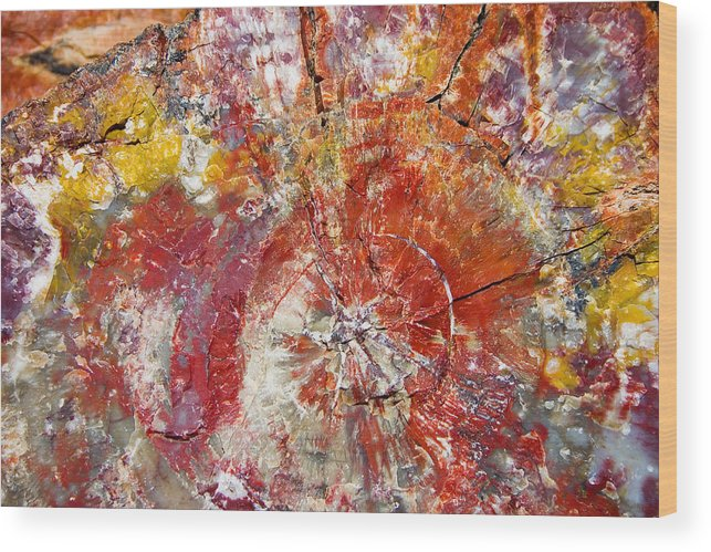 Petrified Wood Stone Texture Abstract Color Skip Hunt Wood Print featuring the photograph Painted Desert Wood 1 by Skip Hunt