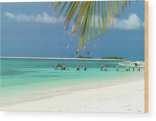 Wood Print featuring the photograph Palm Beach Los Roques Venezuela by Organizacion Bluewater