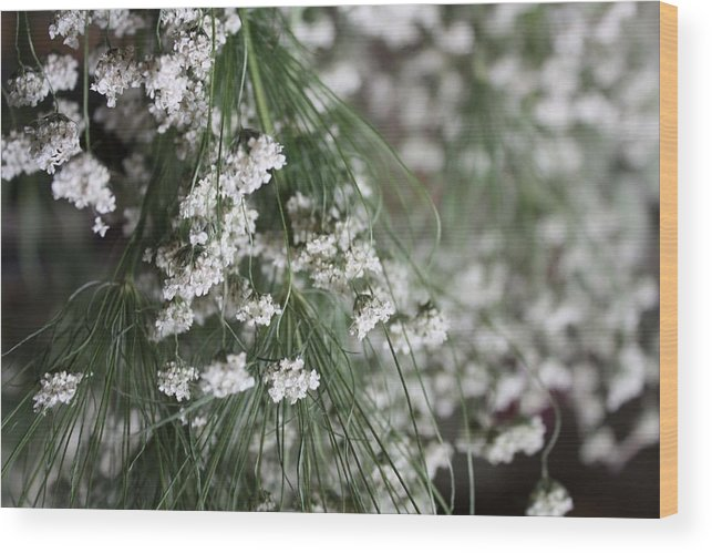 Queen Anne's Lace Wood Print featuring the photograph Queen Anne's Lace by Vicki Cridland
