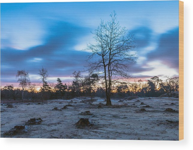 Scenics Wood Print featuring the photograph Standing Strong by William Mevissen