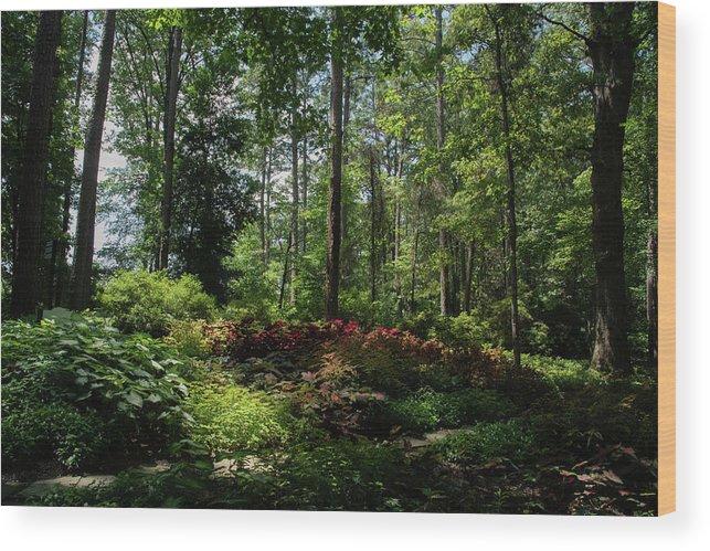 Arkansas Wood Print featuring the photograph Sunlit Garden by Lea Rhea Photography