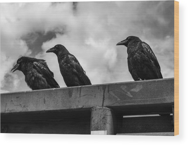 Three Wood Print featuring the photograph Three Crows 2 by Damon Dulewich