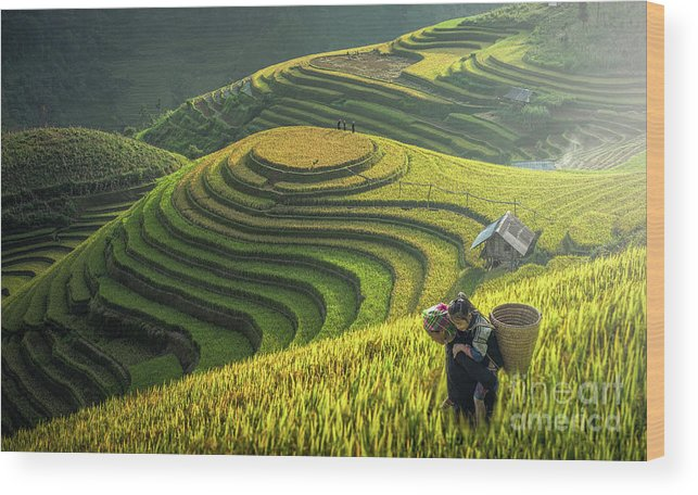 Toughness Wood Print featuring the photograph Mother And Dauther Hmong, Working by Std