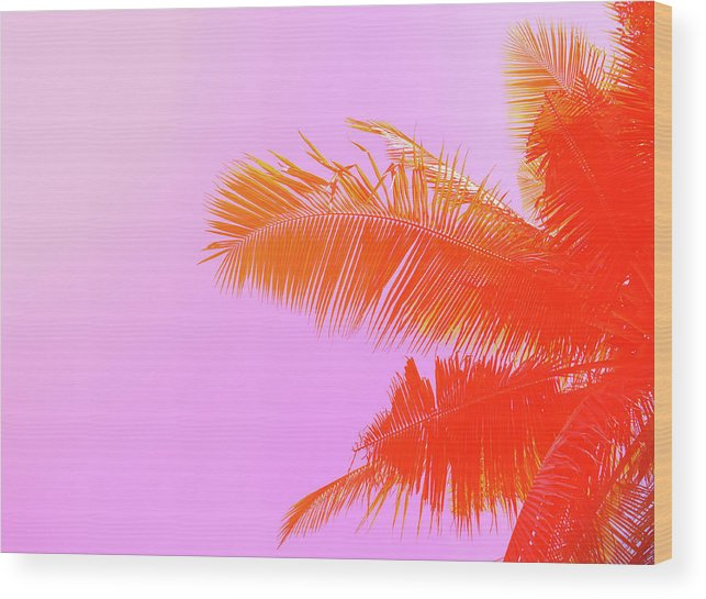 Orange Color Wood Print featuring the photograph Palm Tree On Sky Background. Palm Leaf by Slavadubrovin