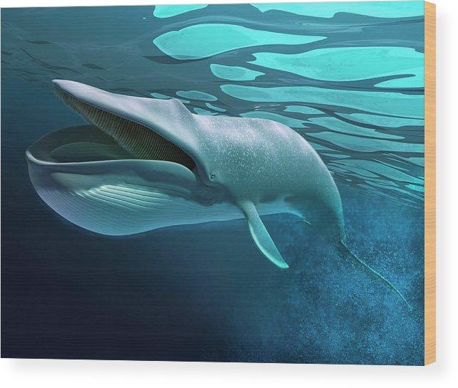 Underwater Wood Print featuring the digital art Whale, Artwork by Leonello Calvetti