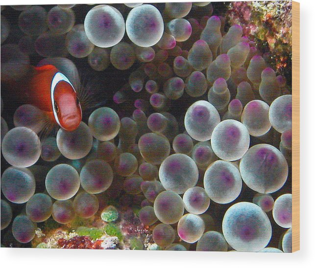 Underwater Wood Print featuring the photograph Nemo by Jean Noren