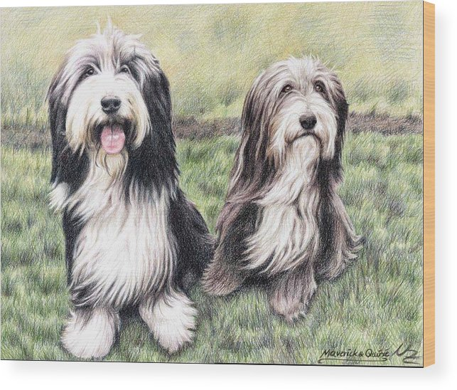 Dogs Wood Print featuring the drawing Bearded Collies by Nicole Zeug