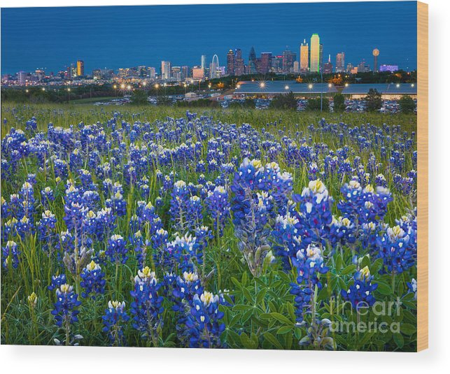 America Wood Print featuring the photograph Bluebonnets In Dallas by Inge Johnsson