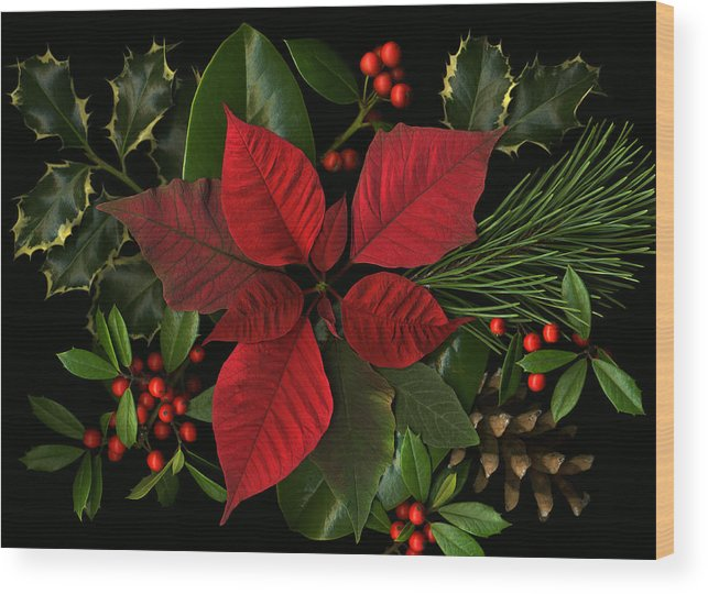Poinsetta Wood Print featuring the photograph Holiday Greenery by Deborah J Humphries