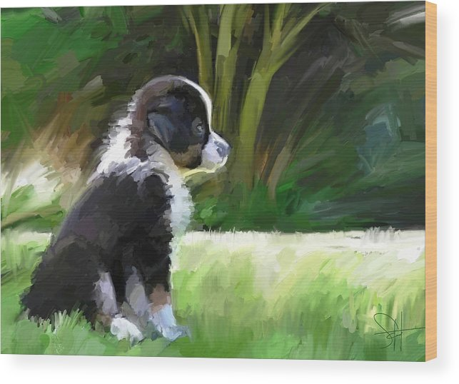Aussie Dog Collie Wood Print featuring the digital art Ku'uipo by Scott Waters