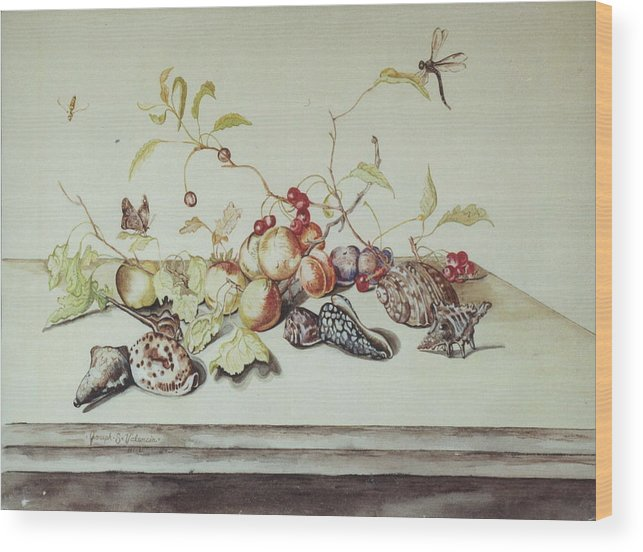 Still Life Fruit Shells Insects Wood Print featuring the painting Sea Shells by Joseph Valencia