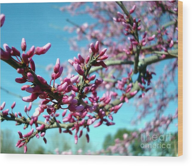 Flowers Wood Print featuring the photograph Spring Bliss by Kathy Bucari