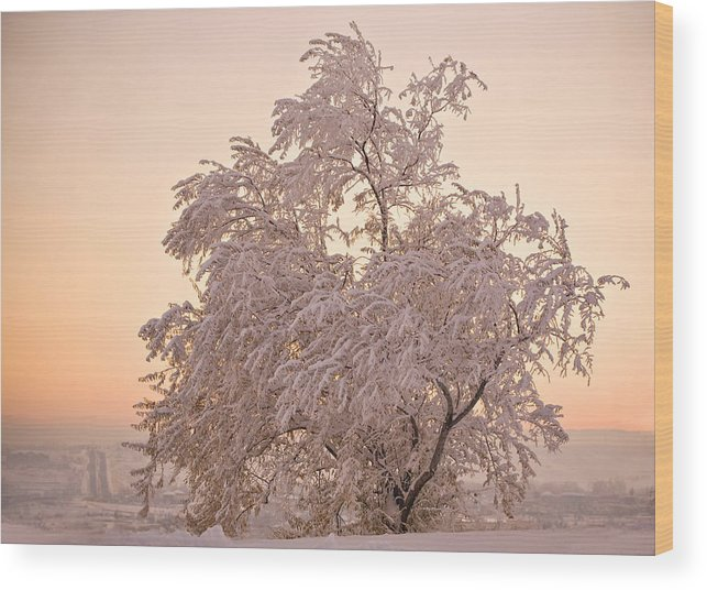 Winter Wood Print featuring the photograph Winter Sunset by Marilyn Hunt