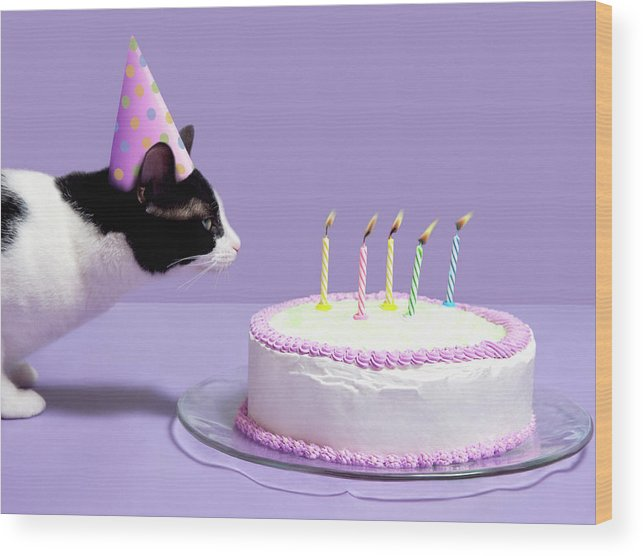Pets Wood Print featuring the photograph Cat Wearing Birthday Hat Blowing Out by Steven Puetzer