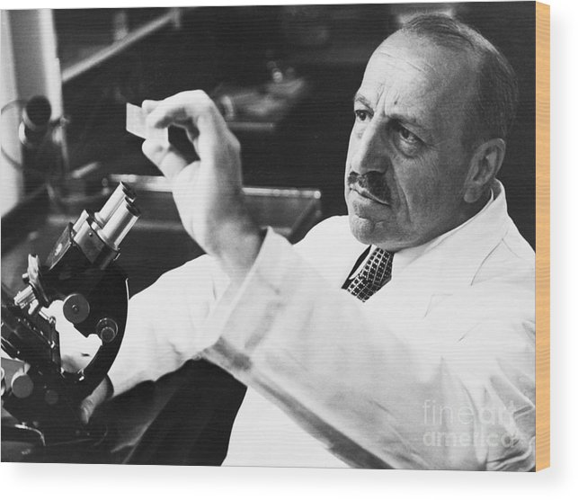Microscope Wood Print featuring the photograph George Papanicolaou Examining A Slide by Bettmann