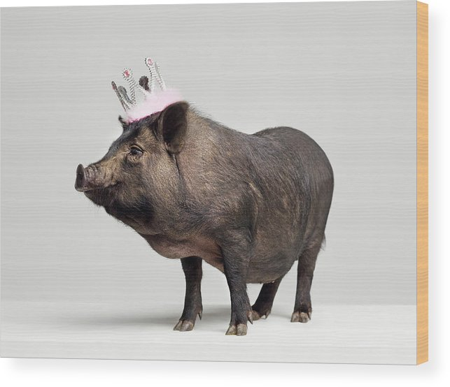 Crown Wood Print featuring the photograph Pig With Toy Crown On Head, Studio Shot by Roger Wright