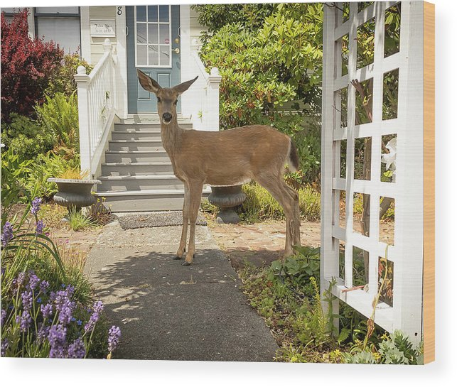Deer Wood Print featuring the photograph Curious by Jim Painter