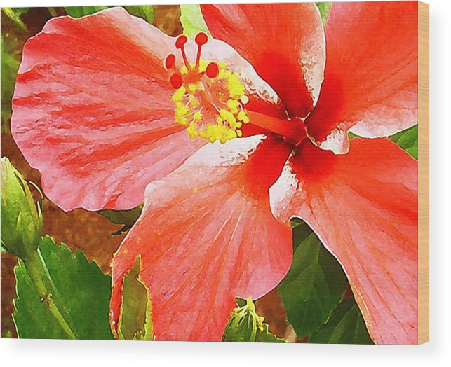 Hibiscus Wood Print featuring the photograph Happy Hibiscus by James Temple