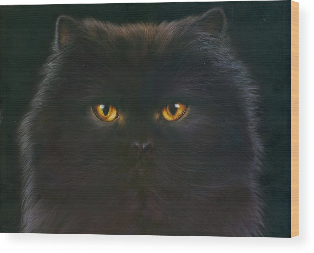 Andrew Farley Wood Print featuring the photograph Black Persian by MGL Meiklejohn Graphics Licensing