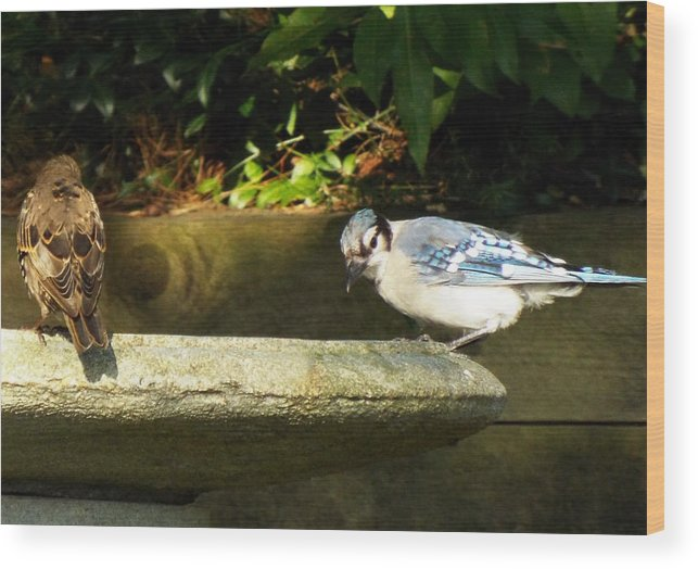 Bird Birds Bluejay Wood Print featuring the photograph Blue Jay Hello by Lisa Roy