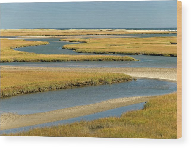 Grass Wood Print featuring the photograph Cape Cod Wetlands by Frankvandenbergh