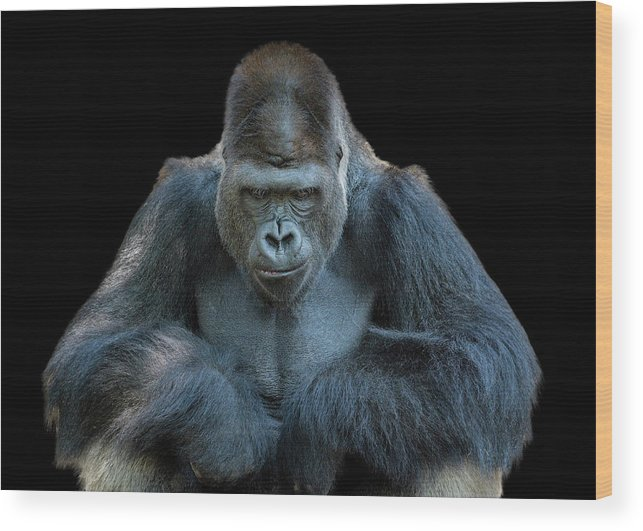 Animal Themes Wood Print featuring the photograph Contemplative Gorilla by Dean Fikar