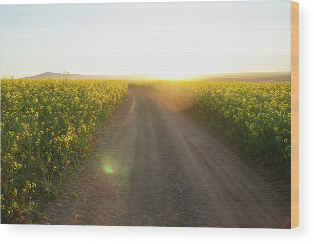 Tranquility Wood Print featuring the photograph Dirt Road In Field Of Flowers by Luka