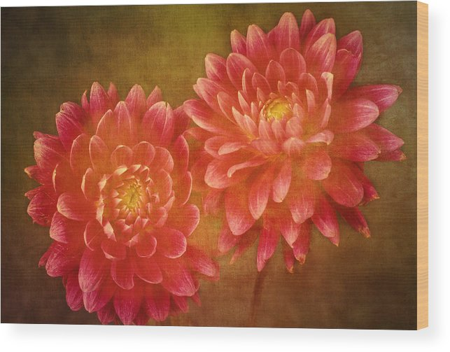 Fine Wood Print featuring the photograph Dual Dahlias by Keith Gondron